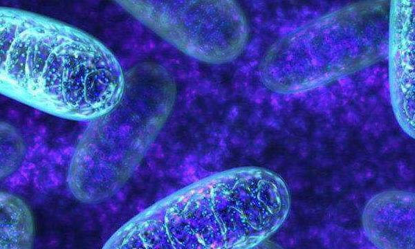Ate 1 de Agosto os precos pelos programas de donacao mitocondrial sao 6.900 e 9.900 euros.  A partir de 1 de Agosto, os precos vao aumentar e serao 9.900 e 14.900 euros.